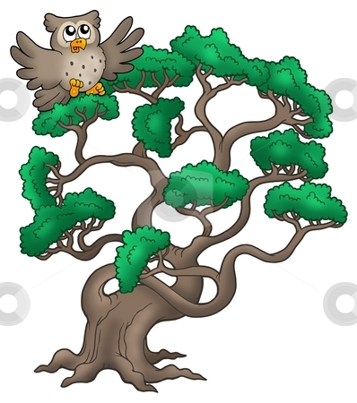 Big pine tree with cartoon owl stock photo, Big pine tree with cartoon owl - color illustration. by Klara Viskova