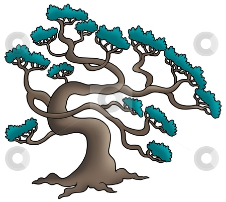 Old pine tree stock photo, Old pine tree - color illustration. by Klara Viskova