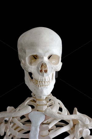 Skeleton stock photo, The upper part of human skeleton isolated on black by P?