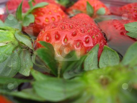 Strawberries stock photo, Fresh Strawberries ready to be eaten by Giovanni Gagliardi