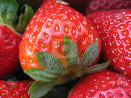 Strawberries stock photo, Fresh Strawberries ready to be eaten by Giovanni Gagliardi