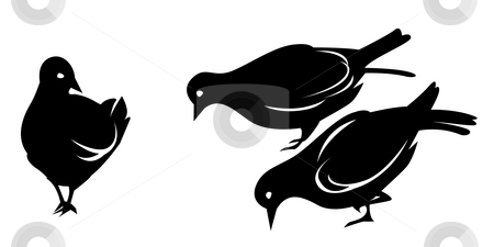 Pigeon stock photo, Drawing of black pigeon in a white background by Su Li