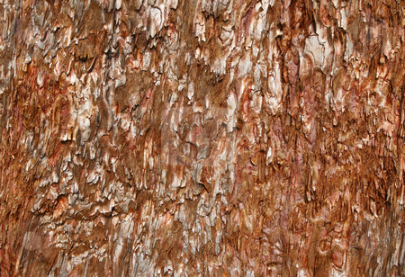Rough tree wood bark natural texture. stock photo, Rough tree wood bark natural texture. by Stephen Rees