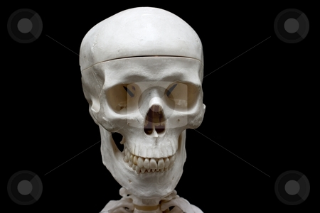 Skull stock photo, Closeup of a skull isolated on black by P?