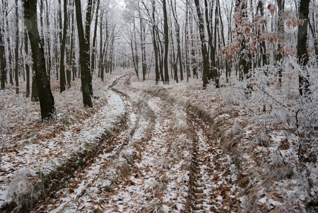 Winter stock photo, Path going through the frosty winter forest by P?