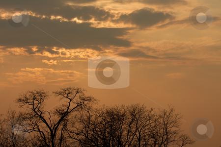Sky stock photo, Dramatic cloudy sky and bare treetops by P?