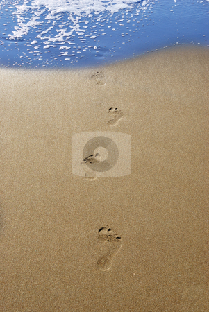 Footprints in sand stock photo, Footprints in send on a beach leading into water. by Ivan Paunovic