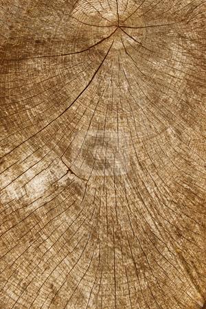 Tree stump wood rings close up. stock photo, Tree stump wood rings close up. by Stephen Rees