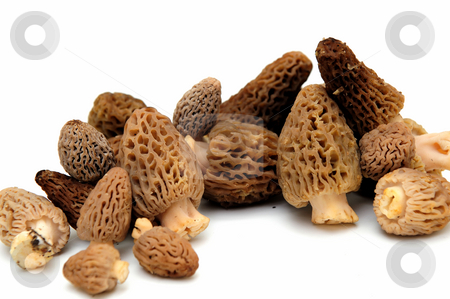 Morel Mushroom stock photo, Morel mushrooms from the California sierra mountains found only in the springtime and highly sought after by gourmet chefs by Lynn Bendickson