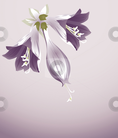 Purple flower stock photo, Three  purple orchid on the purple background by Su Li