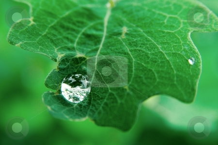 Raindrop stock photo, Raindrop on a green leaf by P?