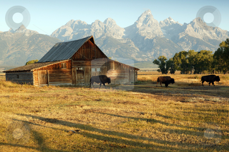 Barn And Grand Teton National Park stock photo, Famous Barn and Grand Teton National Park by Tawann Simmons