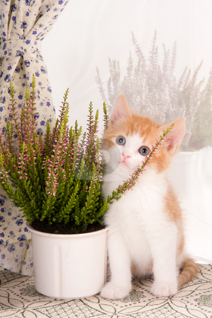 Plant lover stock photo, Six weeks old kitten posing with a plant on a windowsill by Anneke