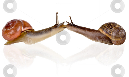 Slow kiss stock photo, Two funny snails kissing eachother very slowly by Anneke