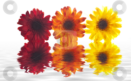 Artificial flowers lined up stock photo, Some artificial flowers lined up with a reflection in the water by Stephen Clarke