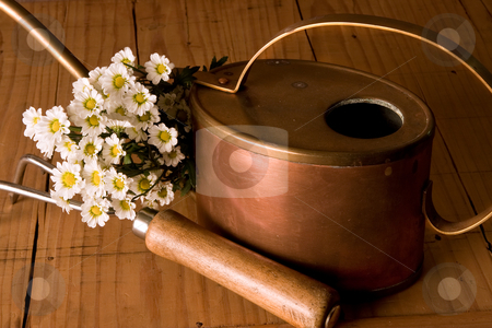 Watering can stock photo, Vintage copper watering can, gardening tool and lovely daisies by Anneke