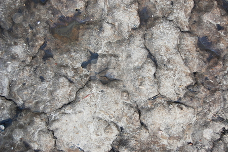 Texture of soil stock photo, Texture and pattern of old dirty soil by Gunnar Pippel