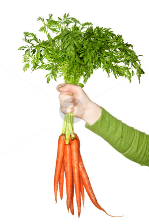 Hand holding carrots stock photo, Woman's hand holding bunch of whole fresh organic orange carrots by Elena Elisseeva