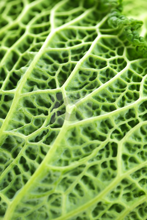 Closeup of green cabbage leaves stock photo, Close up of fresh green cabbage leaves by Elena Elisseeva