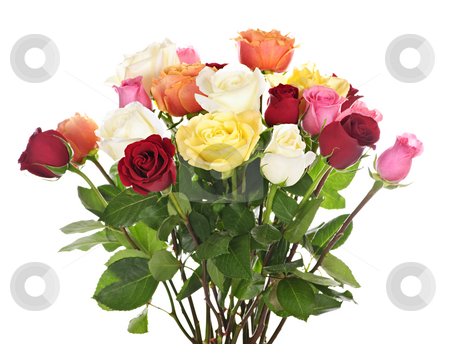 Bouquet of roses stock photo, Bouquet of assorted multicolored  roses isolated on white background by Elena Elisseeva