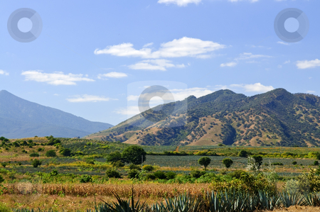 Landscape in Jalisco,  Mexico stock photo, Lanscape with agave cactus fields near Tequila in Jalisco, Mexico by Elena Elisseeva