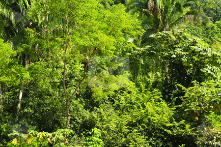 Tropical jungle background stock photo, Background of lush tropical jungle at Pacific coast of Mexico by Elena Elisseeva