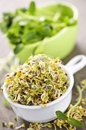 Sprouts in cups stock photo, Fresh alfalfa and sunflower sprouts in cups by Elena Elisseeva