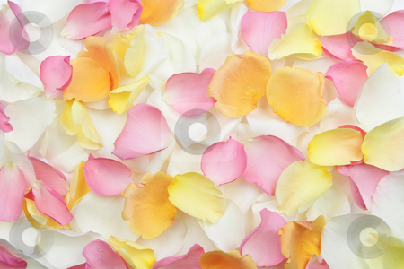 Rose petals background stock photo, Abstract background of fresh scattered rose petals by Elena Elisseeva