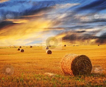 Golden sunset over farm field stock photo, Golden sunset over farm field with hay bales by Elena Elisseeva