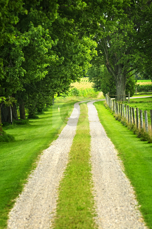 Farm road stock photo, Rural road on small scale sustainable farm with trees and fence by Elena Elisseeva