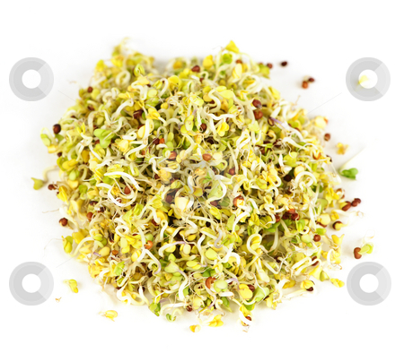 Alfalfa sprouts stock photo, Fresh young alfalfa sprouts isolated on white background by Elena Elisseeva
