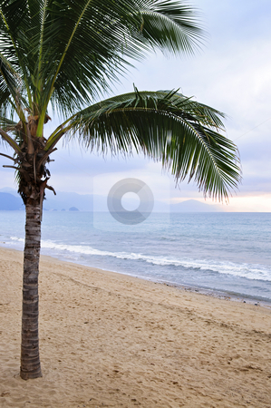 Palm tree on beach in Puerto Vallarta Mexico stock photo, Palm tree on tropical beach in Puerto Vallarta, Jalisco, Mexico by Elena Elisseeva