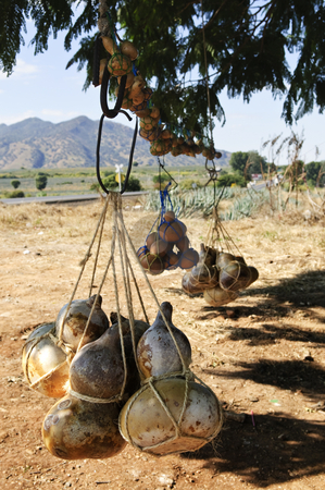 Calabash gourd bottles in Mexico stock photo, Traditional calabash gourd bottles hanging from a tree near Tequila in Jalisco, Mexico by Elena Elisseeva