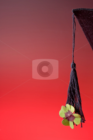 Success cloverleaf stock photo, Good luck cloverleaf hanging on a graduation hat by Anneke
