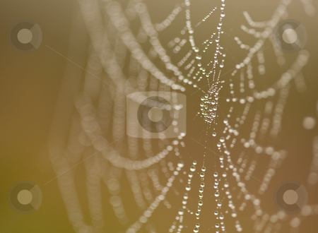 Wet Spider Web in The Morning Mist stock photo, Wet Spider Web in The Morning Mist With Narrow Depth of Field. by Andy Dean