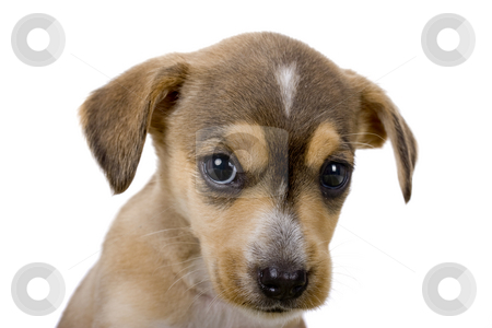 Cute puppy stock photo, Close-up of a cute puppy with a sad look by ikostudio