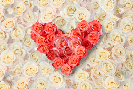 Heart of roses on a background of roses stock photo, Background of the many roses (wedding, the day of St. Valentine) by Dmitry Skutin