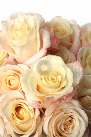 Background of the many roses stock photo, Background of the many roses (wedding, the day of St. Valentine) by Dmitry Skutin