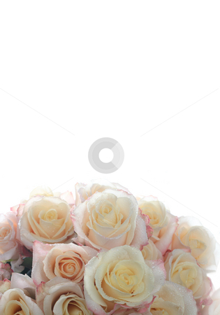 Background of roses stock photo, Background of the many roses (wedding, the day of St. Valentine) by Dmitry Skutin