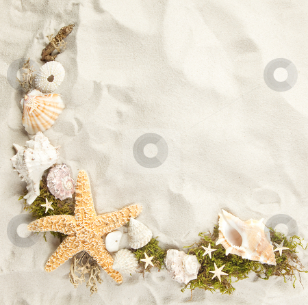 Border of seashells stock photo, Collection of seashells on a sandy beach with copy space by Anneke