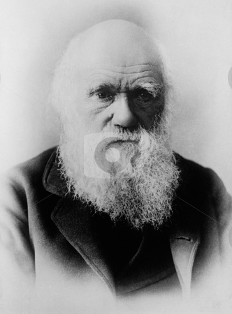 Portrait of Charles Darwin stock photo, 1879 black and white portrait of English naturalist Charles Darwin from glass negative, from photo by Elliott & Fry. Image in public domain by vitue of age. by Martin Crowdy