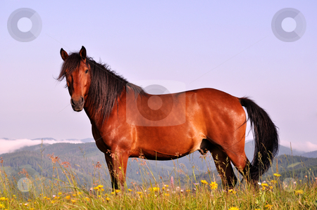 Brown Horse Pictures Beautiful brown horse