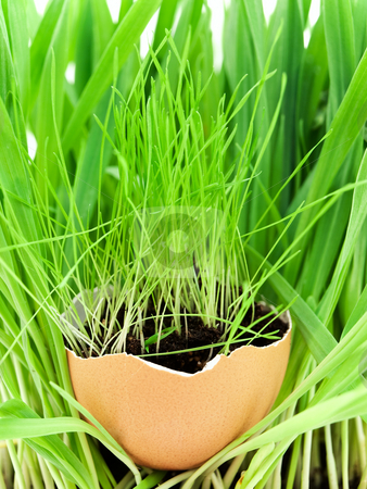 Grass stock photo, Growing grass in egg shell over fresh greenery by Sergej Razvodovskij