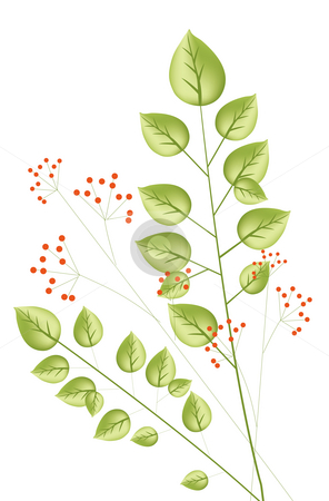 Plant and red  berry stock photo, Illustration drawing of plant with red  berry by Su Li