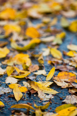Fall leaves stock photo, A shot of colorful yellow leaves on the road by Suprijono Suharjoto