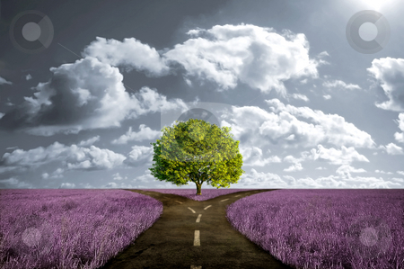 Crossroad in lavender meadow stock photo, Crossroad in lavender meadow and with tree alone by Giordano Aita