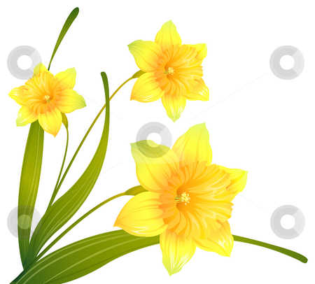 Yellow flower stock photo, Illustration drawing of some beautiful  yellow narcissus flowers by Su Li