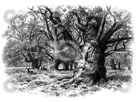 Deer in Needwood forest stock photo, Engraving of deer in Needwood Forest, Tutbury, Staffordshire, England. Original illustration published in 1897 book,