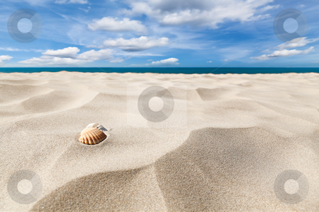 Shells on a beach stock photo, A couple of shell nuts on a tropical sandy beach. Dramatic blue cloudy sky. by Fred DE BAILLIENCOURT