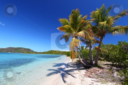 Beef Island Beach (BVI) stock photo, Palm trees on the beach of Beef Island - British Virgin Islands. by Jason Ross